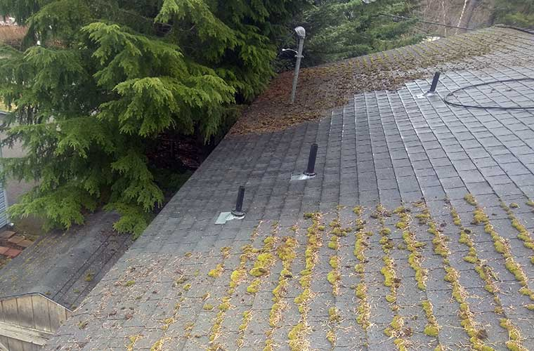Coeur d'Alene Roof top moss removal